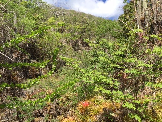 Nature on Mount Christoffel Curacao
